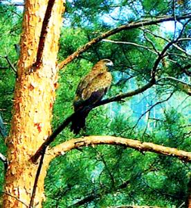 Птицы и погода - продолжение, наблюдения за птицами и их поведением.