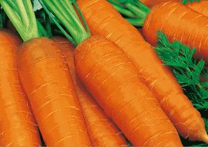 Морковь считается древним овощным растением родом из Средиземноморья.